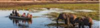 Wildlife viewing in Chobe River |  <i>Peter Walton</i>