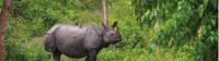 The majestic Asiatic Rhino |  <i>Zac Kostos</i>